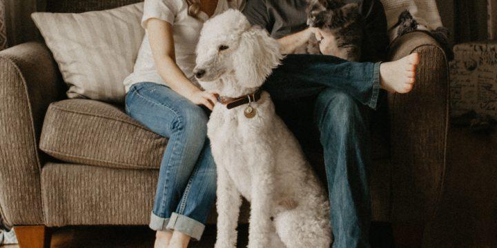 Pets or No Pets for Rentals?